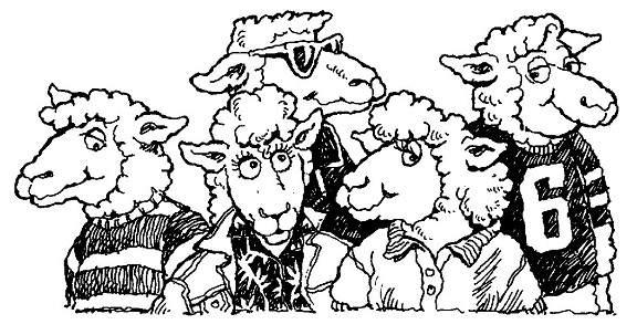 feed my sheep videos