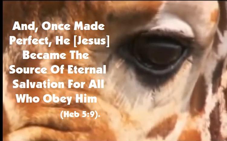 eternal salvation obey Jesus