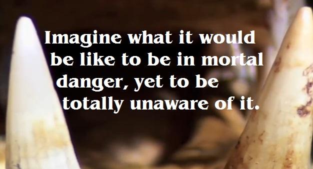 unaware of the danger